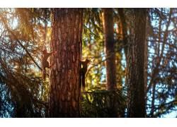动物,哺乳动物,森林,松鼠366098