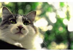 动物,哺乳动物,猫366637