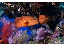 动物,国家地理,鱼,珊瑚,水下338031