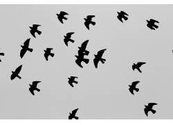 动物,天空,逆光,飞行,翅膀222070