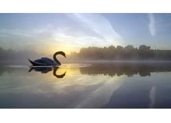 天鹅,性质,水,天空,动物690366