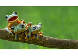 性质,青蛙,两栖动物,动物401306