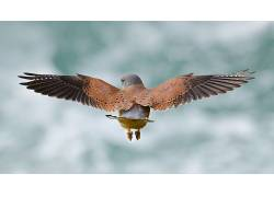 性质,鸟类,动物,翅膀,背部372234