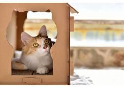 猫,动物495970