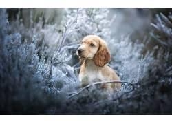 狗,动物,小动物,冬季,草,冰679383