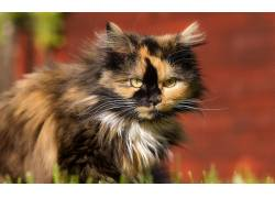 猫,动物503657