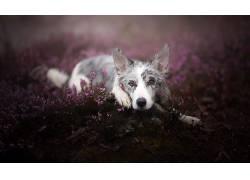 性质,黑暗,植物,动物,狗561621