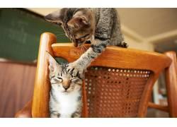 猫,动物526139