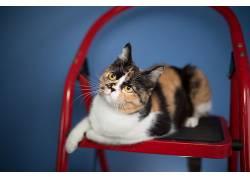 猫,动物534342