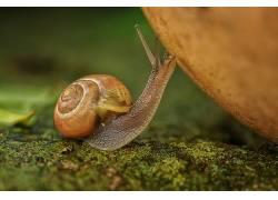 宏,动物,蜗牛,苔藓455836
