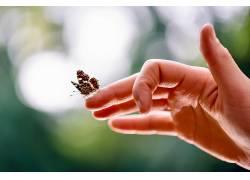 手,昆虫,背景虚化,动物552123