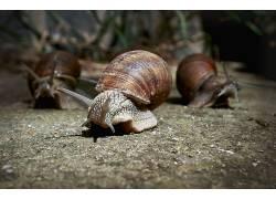 宏,动物,蜗牛389000