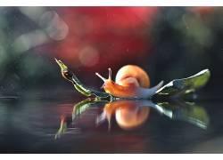 宏,动物,蜗牛597619
