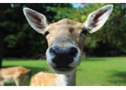 鹿,动物,性质,树木,特写472335