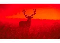 鹿,动物,看着观众,黄昏,日落,领域,Inguna羽毛598715