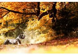 狗,动物,性质,秋季,树叶,树木559522