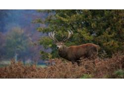 鹿,牛角,木,动物,树木,性质397120