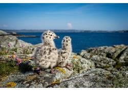 挪威,性质,小动物,动物,鸟类633653