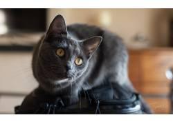 猫,动物555585