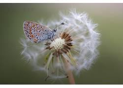 宏,植物,花卉,动物,昆虫,蝴蝶614480