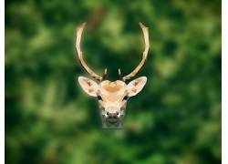 鹿,鹿角,小鹿,动物,低聚,性质447446