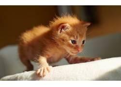 猫,动物578326