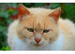 猫,动物580625