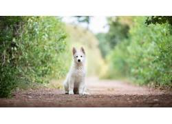 狗,动物,景深620557