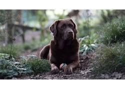 狗,动物,景深671980