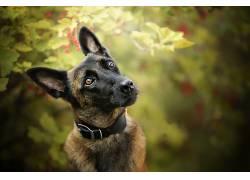 狗,动物,景深674012