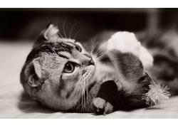 摄影,动物,猫371892