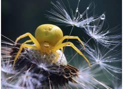 宏,蜘蛛,昆虫,动物659028