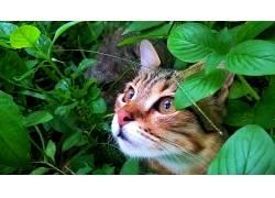 树叶,树木,动物的眼睛,猫680721