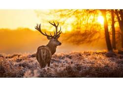 性质,动物,树木,日落,鹿425420