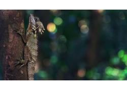 性质,动物,树木,森林,背景虚化,爬行动物,景深608274
