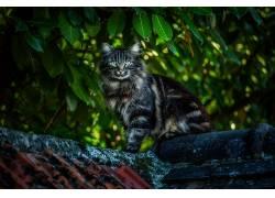 树叶,植物,猫,动物,屋顶632783图片