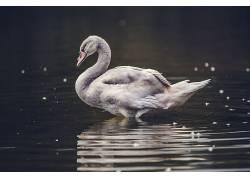 性质,动物,水469216