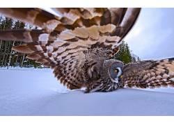 动物,鸟类,猫头鹰381373