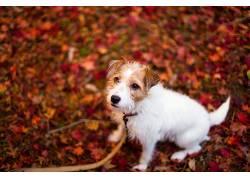 树叶,秋季,动物,狗552419