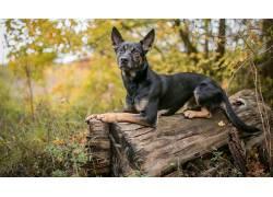 狗,性质,木,动物573300