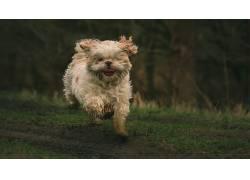 赛跑,在户外,动物,狗493867