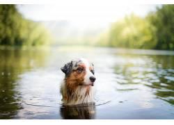 狗,性质,水,动物553211