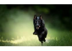赛跑,狗,动物553691