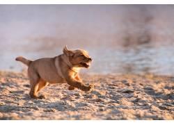 赛跑,狗,动物561720