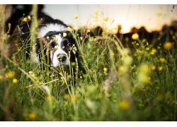 狗,性质,草,动物537905