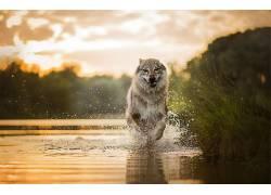 赛跑,狗,性质,水,动物561656