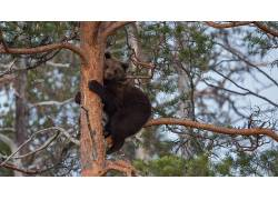 树木,性质,熊,哺乳动物,动物,景深579519