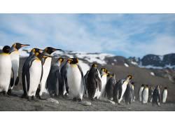 性质,动物,海,太平洋,企鹅370042