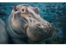 性质,动物,海,水,水下,河马,鱼,蒂姆弗拉奇,浅滩的鱼672929