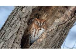 树木,猫头鹰,性质,动物474098